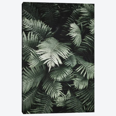 Jungle Fern Canvas Print #SSE102} by Sisi & Seb Art Print