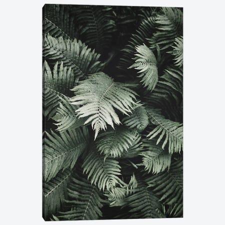 Jungle Fern Canvas Print #SSE102} by Sisi & Seb Art Print