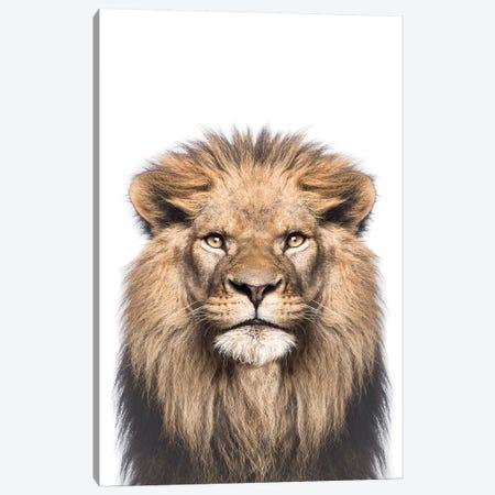 Lion Canvas Print #SSE109} by Sisi & Seb Art Print