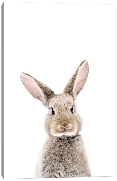 Baby Bunny Canvas Art Print