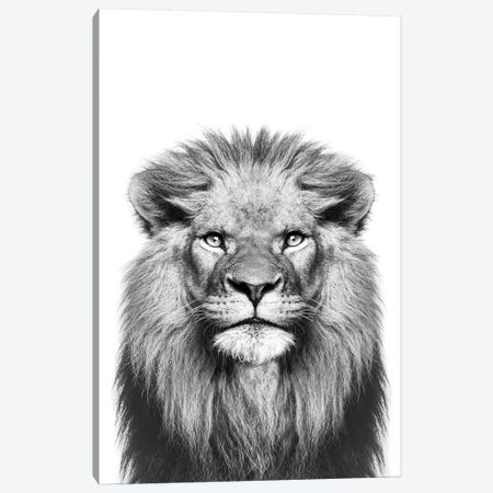 Lion In Black & White Canvas Print #SSE110} by Sisi & Seb Canvas Art