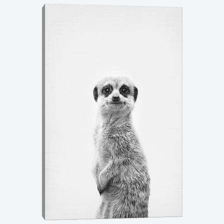 Meerkat Canvas Print #SSE115} by Sisi & Seb Canvas Art Print