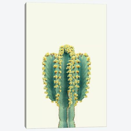 Mexican Cactus Canvas Print #SSE116} by Sisi & Seb Canvas Art Print