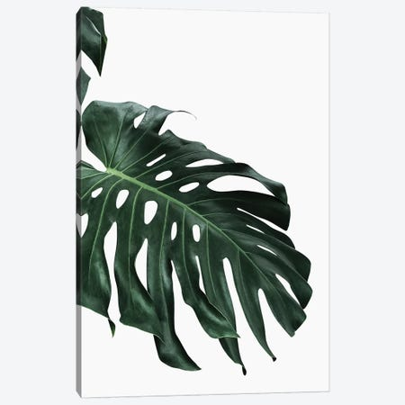 Monstera I Canvas Print #SSE119} by Sisi & Seb Canvas Art