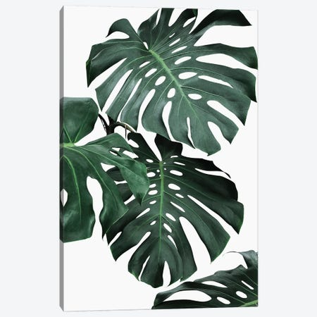 Monstera II 3-Piece Canvas #SSE120} by Sisi & Seb Canvas Print