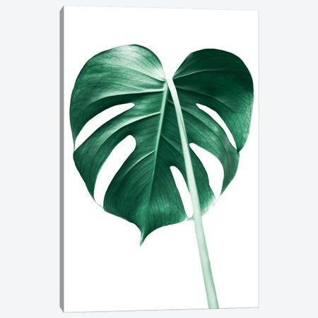 Monstera Leaf Canvas Print #SSE121} by Sisi & Seb Art Print