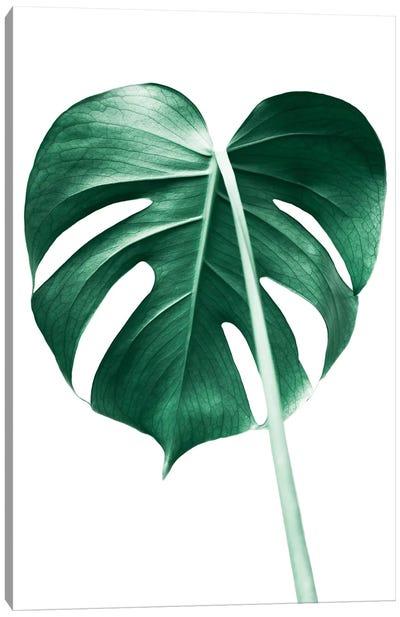 Monstera Leaf Canvas Art Print