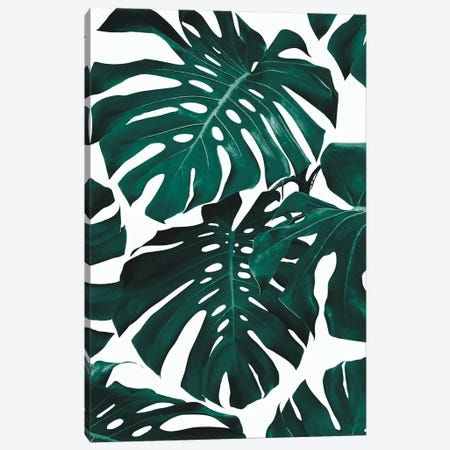 Monstera Leaf Pattern Canvas Print #SSE123} by Sisi & Seb Canvas Art Print