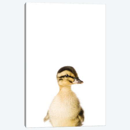 Baby Duckling Canvas Print #SSE12} by Sisi & Seb Canvas Wall Art