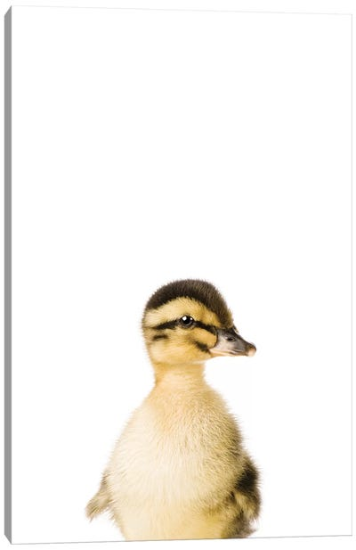 Baby Duckling Canvas Art Print