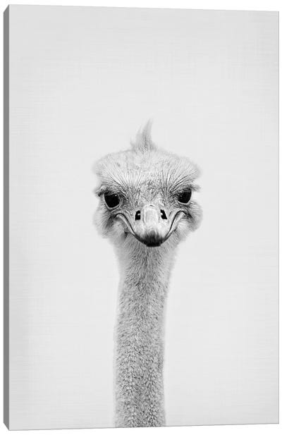 Ostrich Canvas Art Print