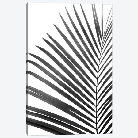 Palm Leaf In Black & White Canvas Print #SSE135} by Sisi & Seb Canvas Art Print