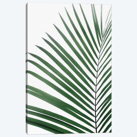 Paml Leaf Canvas Print #SSE138} by Sisi & Seb Canvas Artwork