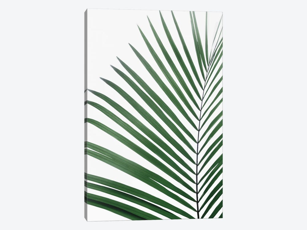 Paml Leaf by Sisi & Seb 1-piece Canvas Print