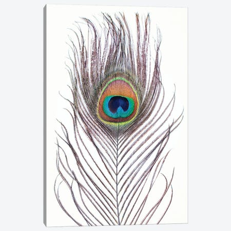 Peacock Feather Canvas Print #SSE144} by Sisi & Seb Canvas Art