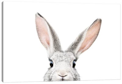 Peekabo Bunny Canvas Art Print