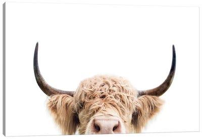 Peeking Cow Canvas Art Print