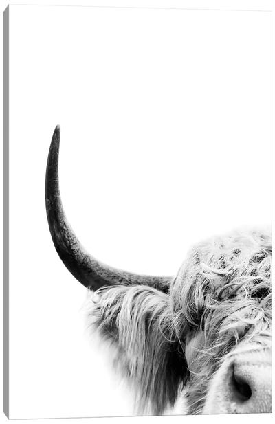 Peeking Cow II Canvas Art Print