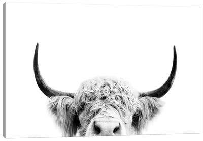 Peeking Cow In Black & White Canvas Art Print
