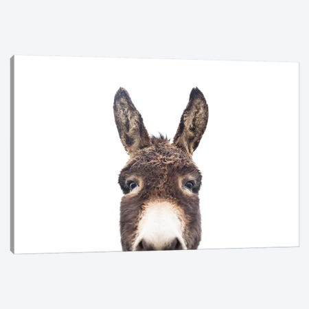Peeking Donkey Canvas Print #SSE150} by Sisi & Seb Canvas Wall Art
