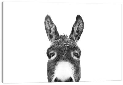Peeking Donkey In Black & White Canvas Art Print