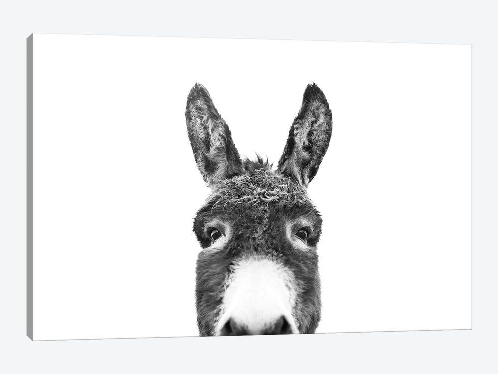 Peeking Donkey In Black & White by Sisi & Seb 1-piece Canvas Wall Art