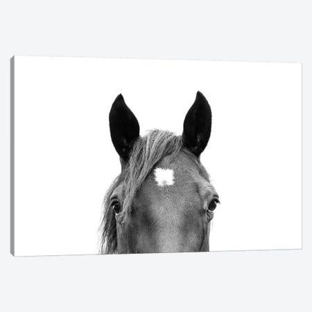 Peeking Horse In Black & White Canvas Print #SSE152} by Sisi & Seb Canvas Wall Art