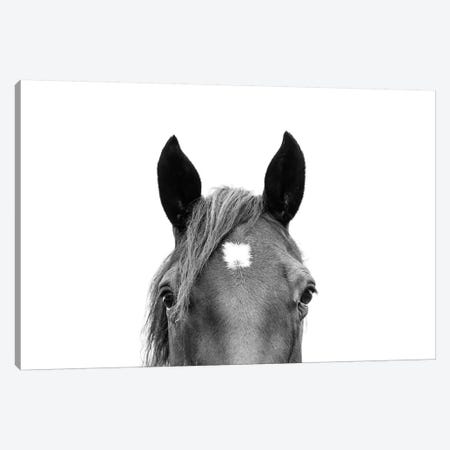 Peeking Horse In Black & White 3-Piece Canvas #SSE152} by Sisi & Seb Canvas Wall Art