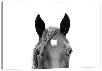 Peeking Horse In Black & White Canvas Art Print