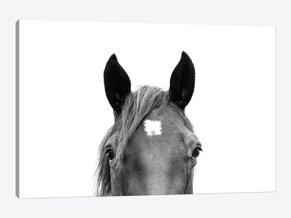 Peeking Horse In Black & White by Sisi & Seb 1-piece Canvas Print