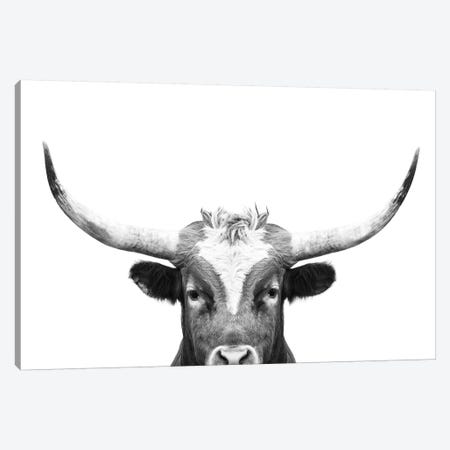 Peeking Long Horn In Black & White Canvas Print #SSE155} by Sisi & Seb Canvas Art Print
