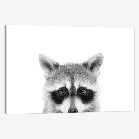 Peeking Raccoon Canvas Print #SSE156} by Sisi & Seb Canvas Print