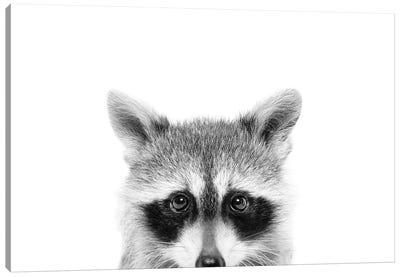 Peeking Raccoon Canvas Art Print