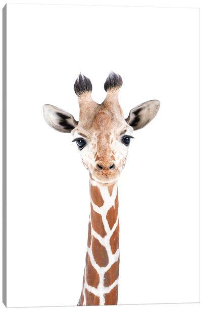 Baby Giraffe Canvas Art Print
