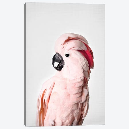 Pink Cockatoo Canvas Print #SSE161} by Sisi & Seb Art Print