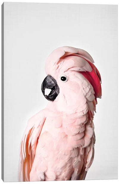 Pink Cockatoo Canvas Art Print