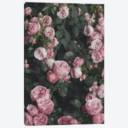 Pink Rose Bush 3-Piece Canvas #SSE169} by Sisi & Seb Canvas Art Print