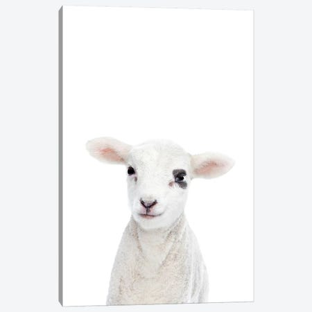 Baby Lamb Canvas Print #SSE16} by Sisi & Seb Canvas Print