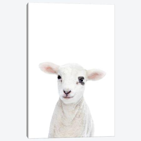 Baby Lamb Canvas Print #SSE16} by Sisi & Seb Canvas Print