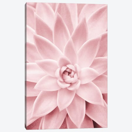 Pink Succulent Canvas Print #SSE172} by Sisi & Seb Canvas Artwork