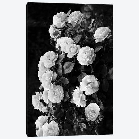 Rose Bush 3-Piece Canvas #SSE184} by Sisi & Seb Canvas Wall Art