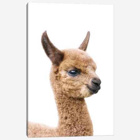Baby Llama Canvas Print #SSE18} by Sisi & Seb Canvas Artwork