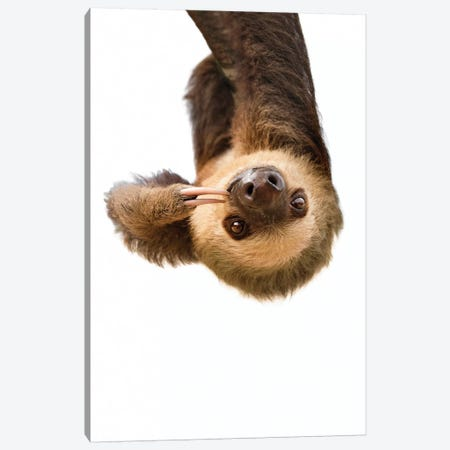 Sloth Canvas Print #SSE190} by Sisi & Seb Canvas Art