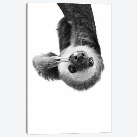 Sloth In Black & White Canvas Print #SSE191} by Sisi & Seb Canvas Artwork