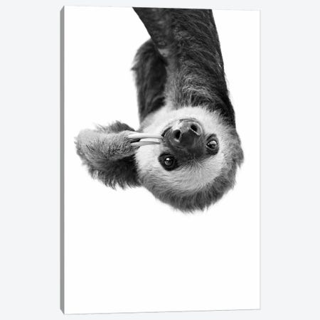 Sloth In Black & White Canvas Print #SSE191} by Sisi & Seb Canvas Artwork