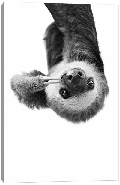 Sloth In Black & White Canvas Art Print