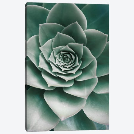 Succulent Canvas Print #SSE192} by Sisi & Seb Canvas Wall Art