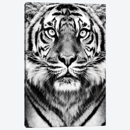 Tiger In Black & White Canvas Print #SSE199} by Sisi & Seb Canvas Art
