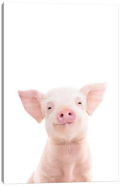 Baby Piglet Canvas Art Print