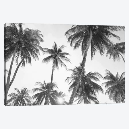 Tropical In Black & White 3-Piece Canvas #SSE202} by Sisi & Seb Canvas Artwork
